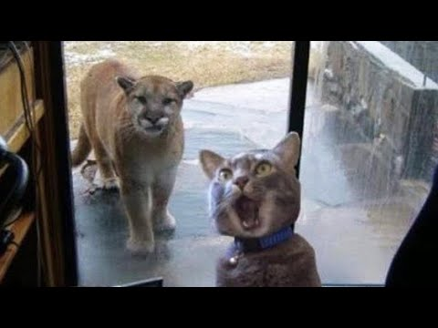 Funniest Animals   Awesome Funny Animals' Life Videos   Cutest Animals Ever