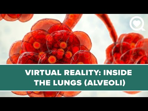(Lung) Alveoli VR Experience