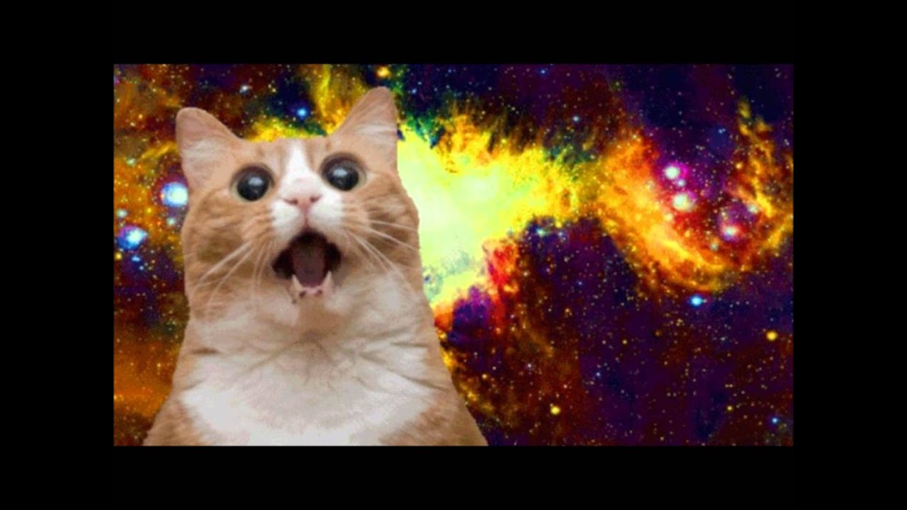 Do Cats Land On Their Feet in Space?
