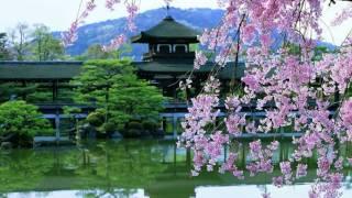 цветущая сакура(Это видео создано в редакторе слайд-шоу YouTube: http://www.youtube.com/upload., 2016-10-12T08:34:27.000Z)