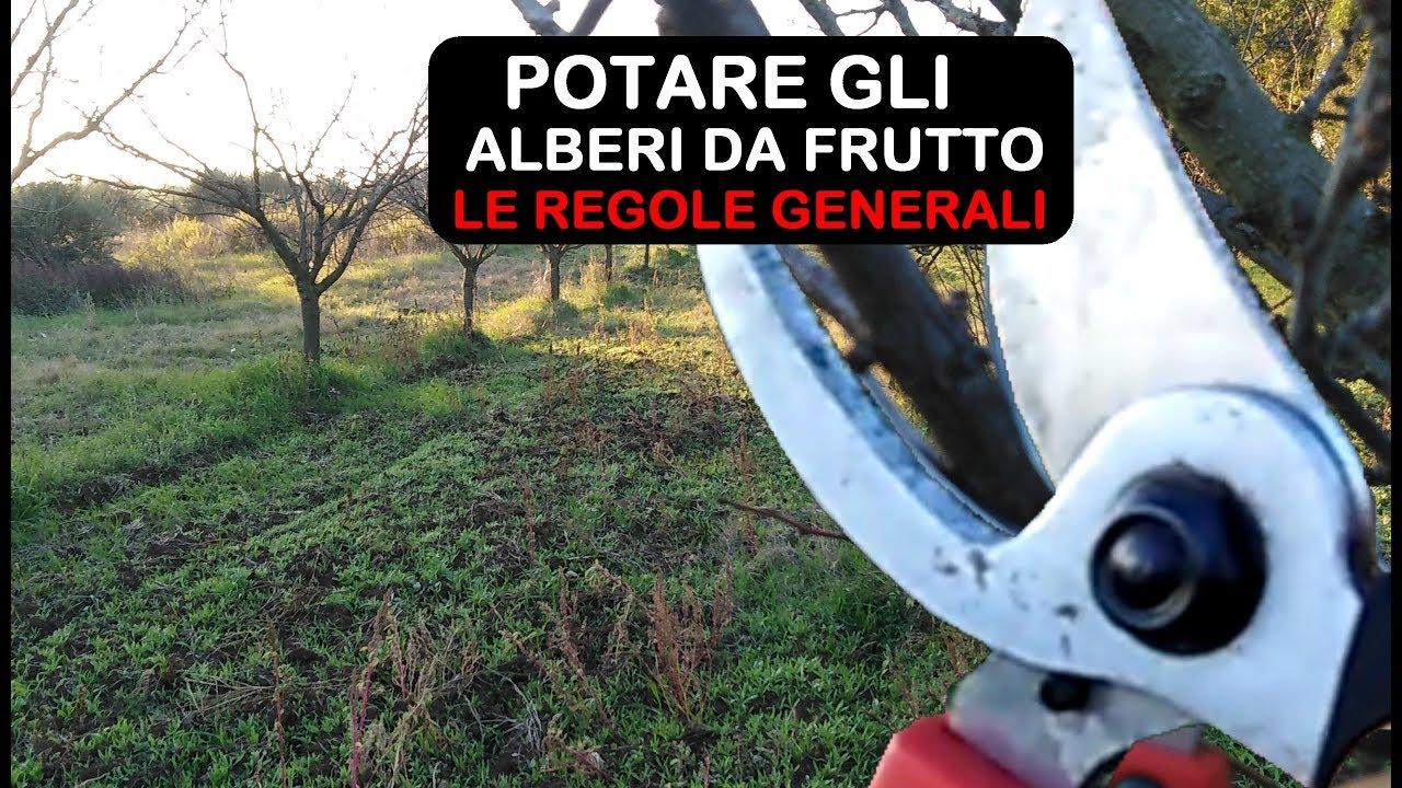 Foto Di Alberi Da Frutto potatura alberi da frutto regole generali