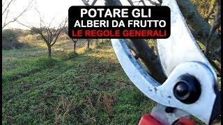POTATURA ALBERI DA FRUTTO REGOLE GENERALI