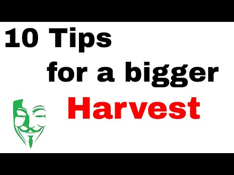 10 Autoflower Grow Tips for a BIGGER HARVEST and healthier plants
