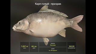 Русская рыбалка 4 Russian fishing 4 о Янтарное Карп фарм редкие карпы