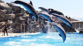 Батуми 2015 дельфинарий полная версия/Batumi, Georgia 2015 Dolphinarium