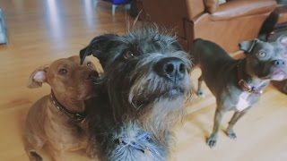 BarkBox Delivers Treats To Senior Dogs Of Life In The Dog House