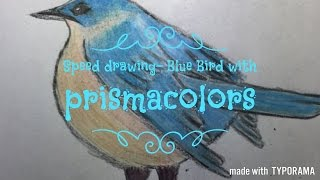 Speed Drawing- A Blue Bird with Prismacolors