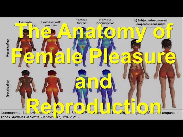 The Anatomy of Female Pleasure and Reproduction