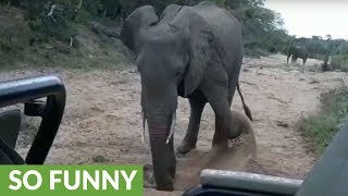 Elephant throw sand and water at tourists on safari