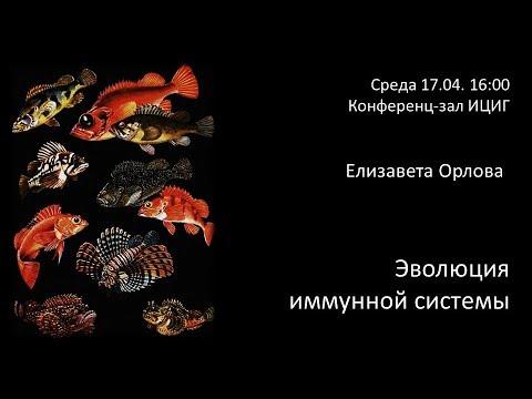 """Елизавета Орлова """"Эволюция иммунной системы""""."""