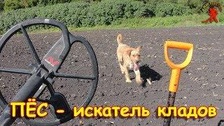 ПЁС - искатель кладов !) 💰👍😃