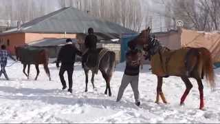 Şampiyon atlara kış kampı