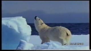 SuperQuark- Il regno d'Artico