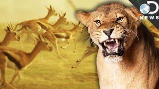 Why We Should Love Apex Predators