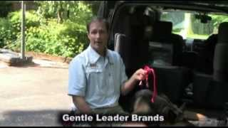 """gentle Leader"" Dog Training Collar Video Sample"