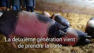 Eyvirat (24) : reportage dans un élevage de cul noir