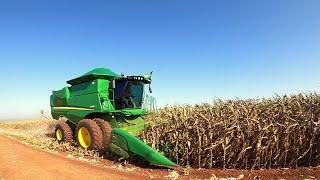 Inicio da colheita de milho safrinha 2021 no Paraná.