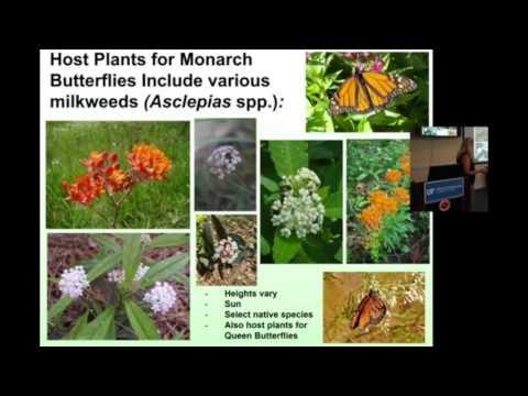 Attracting Butterflies to the Home Landscape - Master Gardener Jody Wood-Putnam