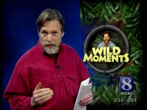 VIDEO: Jack Hubley Aks You To Go To Bat -- For Bats