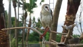 MAMAKU HITS - Serunya ajak anak ke Bali (21/5/2017) part 3