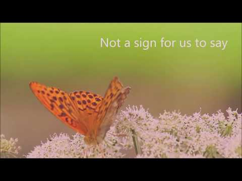 Gianni Bodo (feat.) Brigitte Pace - Hurricanes and Butterflies (Flowers Don't Die)  Lyric Video