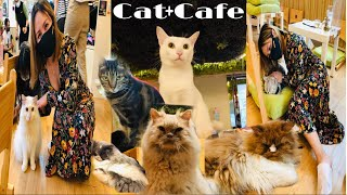 We went to a Cat Cafe in Hong Kong| Cat + Coffee Cuteness Overload