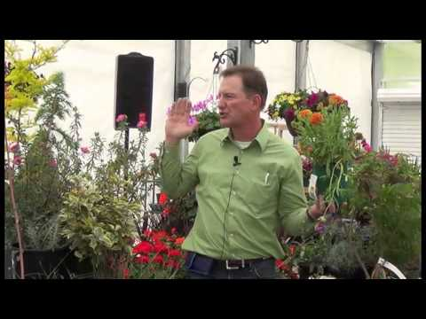04 25 15 Plants That Need Less Water Part 2