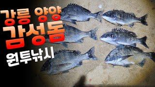 강릉 양양 감성돔 원투낚시 #감성돔채비 #감성돔 포인트