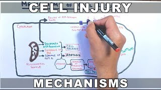 Mechanisms of Cell Injury
