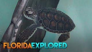 Sea Turtle Hospital at Gumbo Limbo Nature Center - Boca Raton, FL
