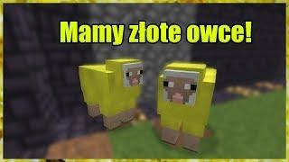 xLajthc.pl #1 Mamy złote owce!