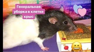 🌸Генеральная уборка в клетке у крыс 🐀 💖🐀💖🐀