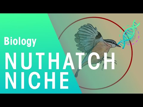 The Niche of the Nuthatch | Biology for All | FuseSchool