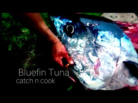 BLUEFIN TUNA catch n cook, overnight offshore fishing with Josh James