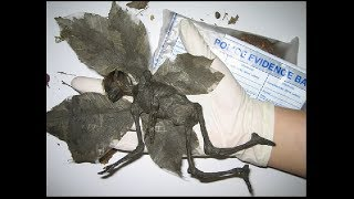 Учёным попали в руки мумии странных существ. Все  ахнули от результатов обследования. Док. фильм.