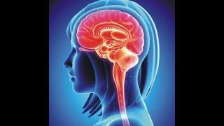 Нервная система человека. Введение. #дистанционноеобучение #анатомия #медицина #медлекции #