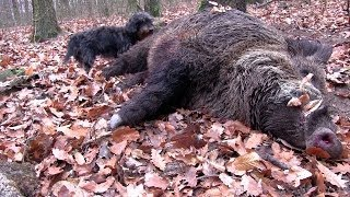 The Shooting Show Christmas special -- wounded wild boar follow-up in Hungary