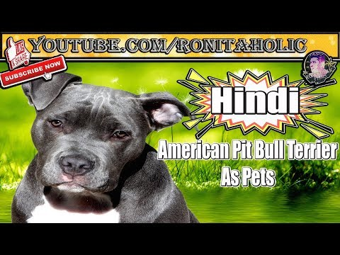 Everything about American Pit Bull Terrier in Hindi