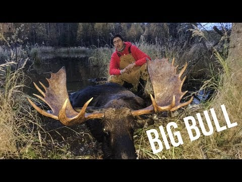 2018 Saskatchewan Moose Hunt