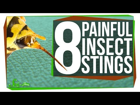Download Youtube: 8 of the Worst Stinging Insects