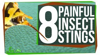8 of the Worst Stinging Insects