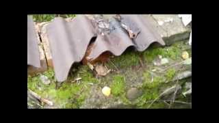 видео Технические характеристики материала коррубит