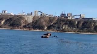 Косатки ловят нерпу у берега Магадана