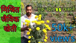 मिश्रित खेती , एक साथ दस से अधिक फसलें उगाएं