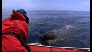 Plonger avec les cachalots