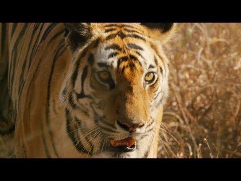 Dynasties: DVD And Blu-Ray Trailer   BBC Earth