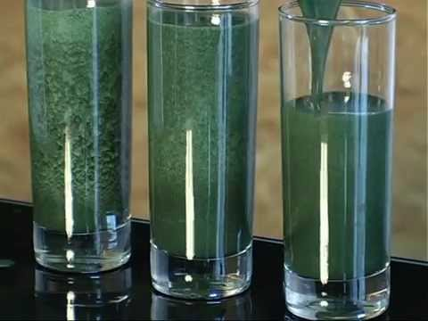 Хлорелла - полезные свойства и противопоказания