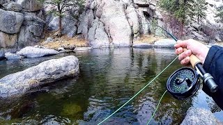 Fly Fishing for Trout in the Mountains