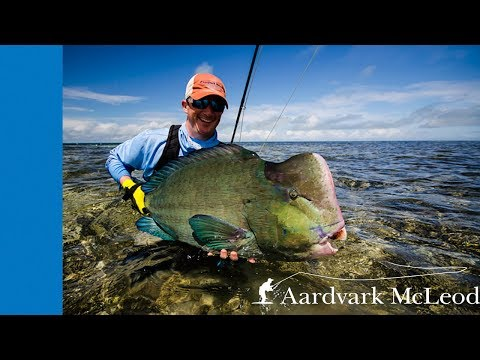 How To Catch Bumphead Parrotfish On The Fly -  Part 2