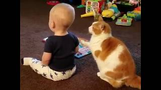 Funny Cats Playing With Babies